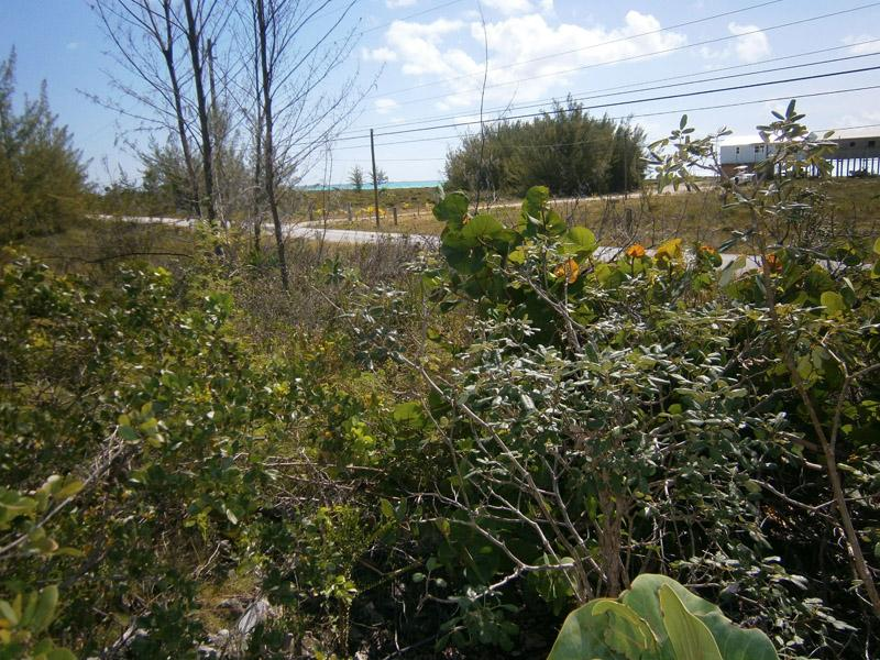 Additional photo for property listing at Vacant Lot - Current  Current, 伊路瑟拉 . 巴哈马