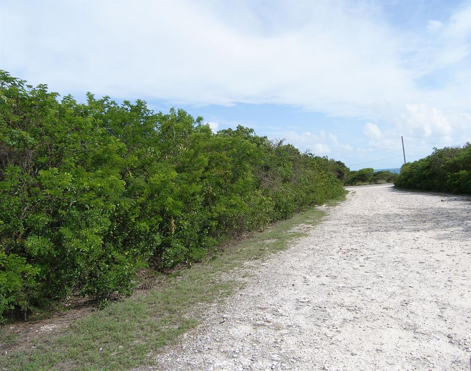 Other for Sale at Lot 21 Block 47 C, Eleuthera, Bahamas Other Countries